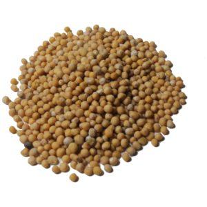 Gorczyca nasiona